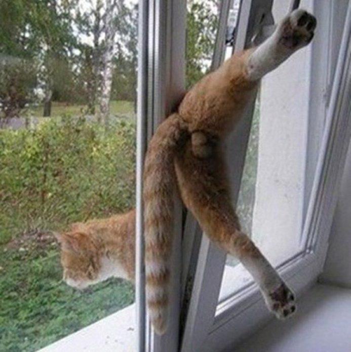 Смешной кот в странной ситуации с окном