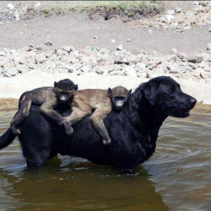 Обезьянки с собакой