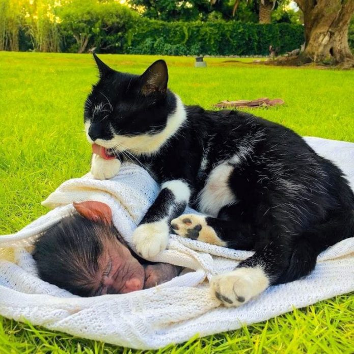 Обезьянка с кошкой