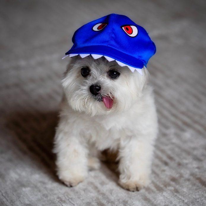 Собака Норберт