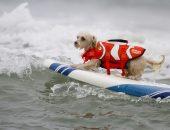 собака серфинг