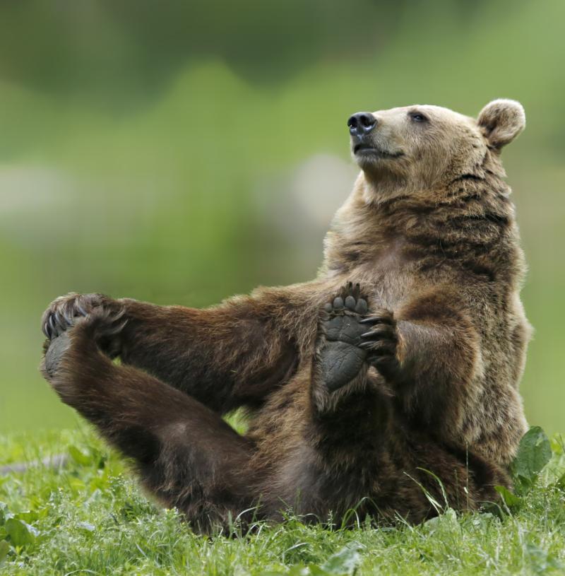 Медведь приколы картинки, осень картинки