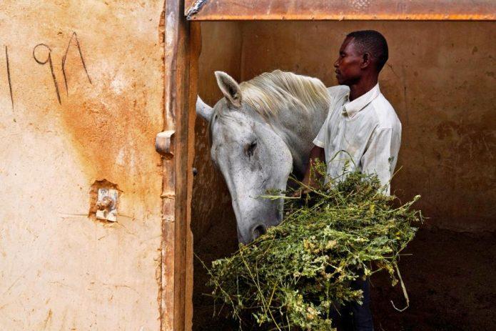 Лошадь ест с рук