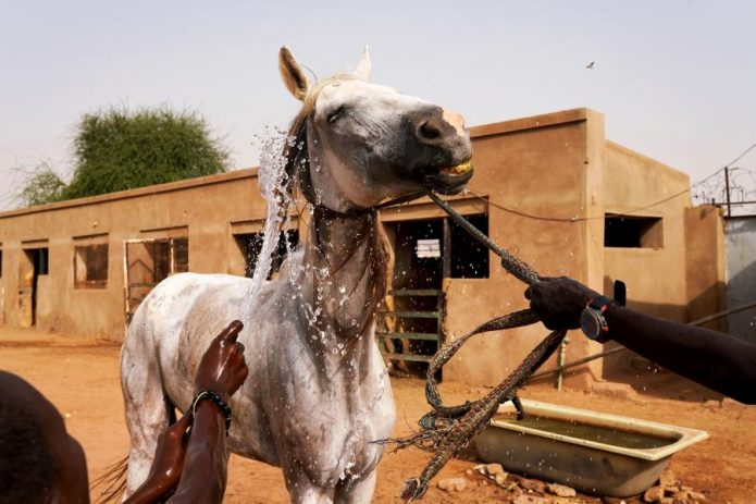 Лошадь моют