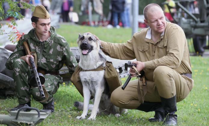 Собака и солдаты
