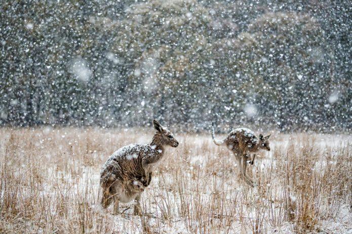 Australian Geographic Nature Photographer