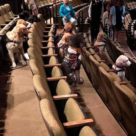 Собаки смотрят постановку