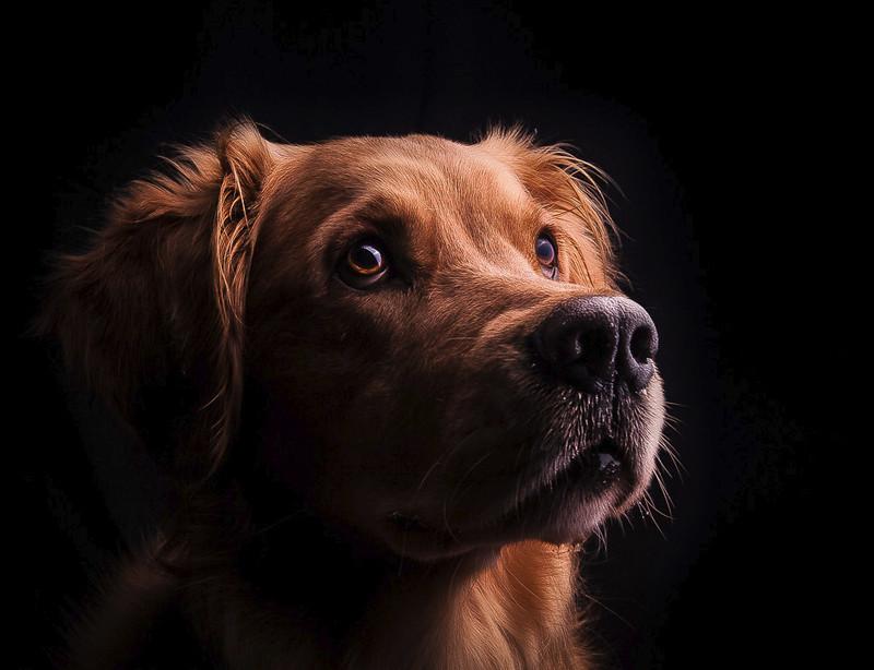 собаку фотографируют