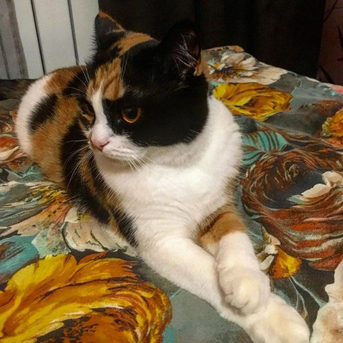 кошка Зина