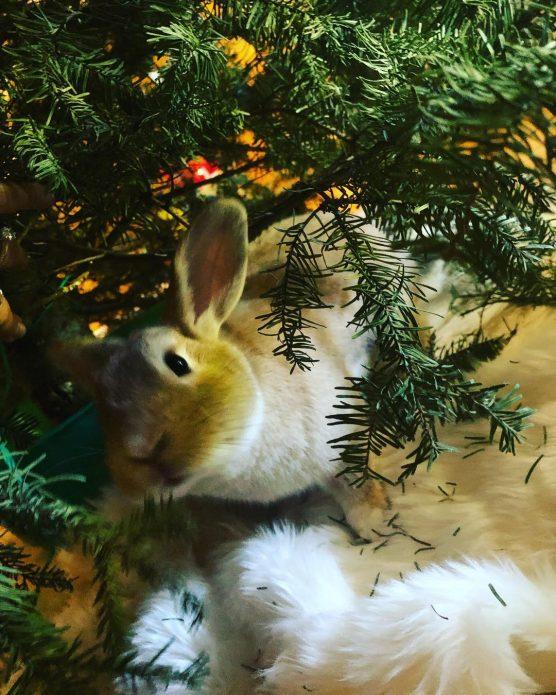 кролик Саймон