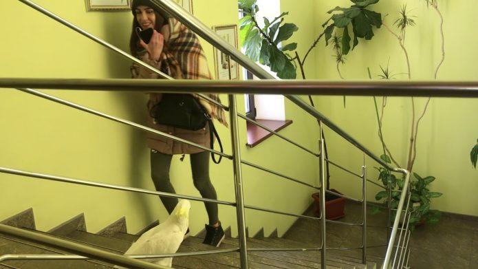 Кирюня встречает клиента офиса
