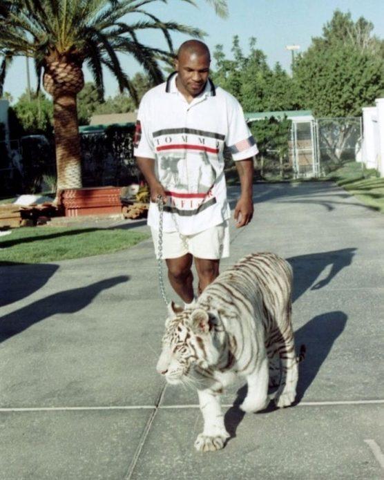 Майк Тайсон и его белый тигр