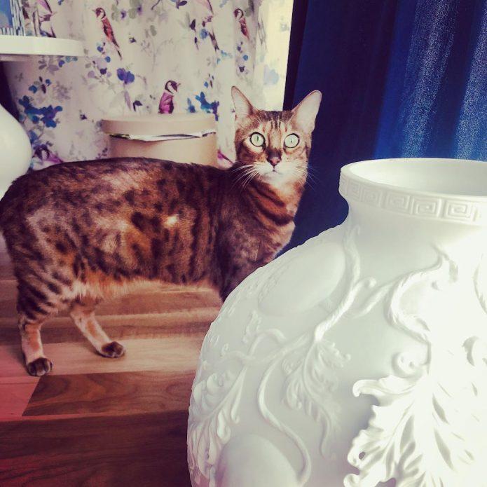 кошка Энжи