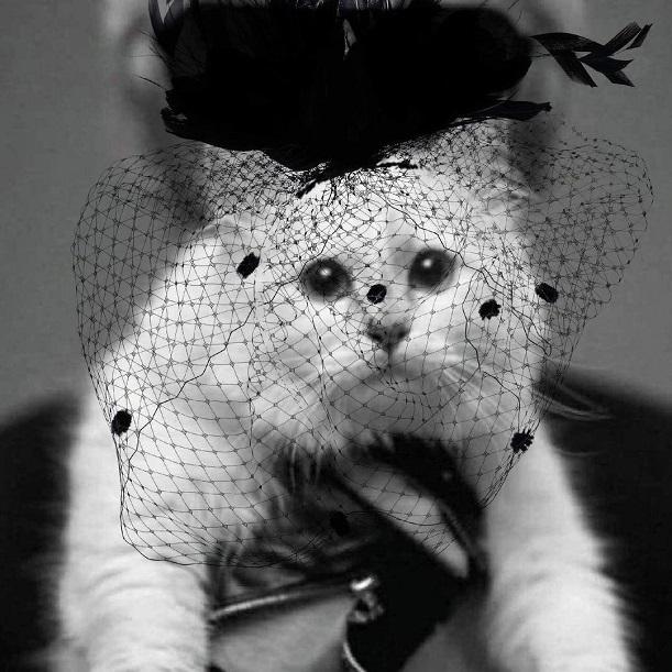 Кошка Шупетт