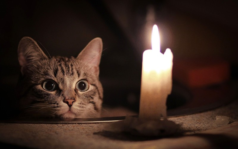 Кот и свеча