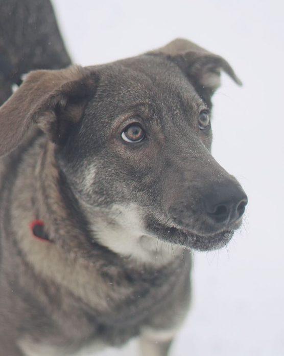 собака Мия