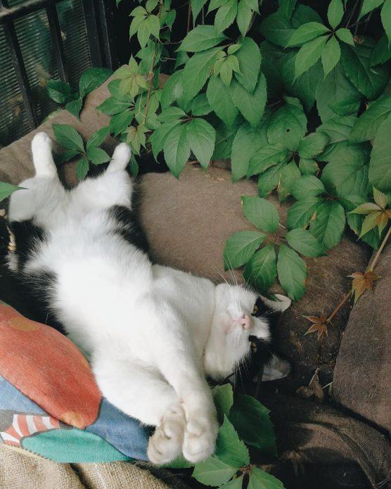 кошка Сладкарь
