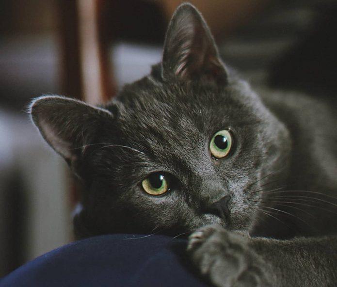 кошка Тучка