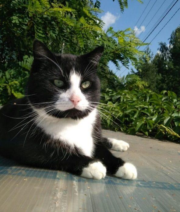 кошка Пират