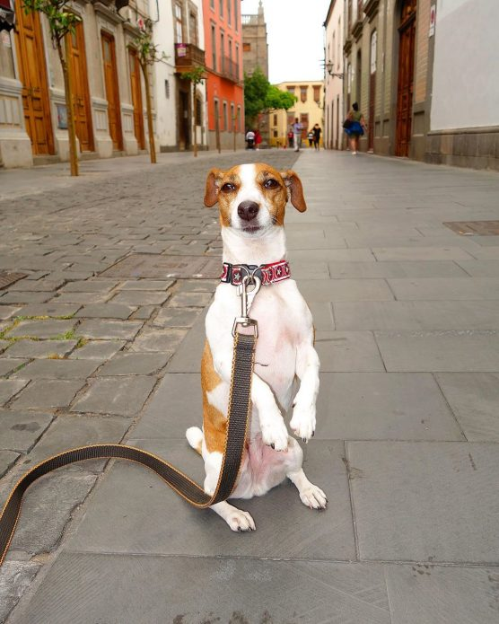 Собака Джина