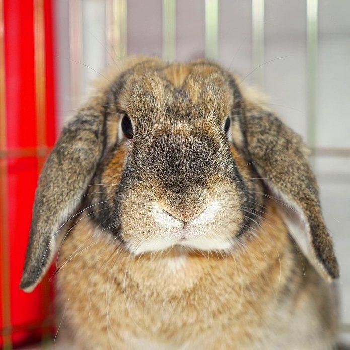 кролик Эльза