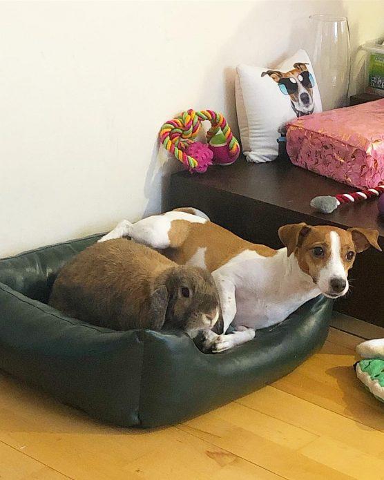 кролик Эльза и собака Джина