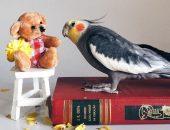 Попугай Джек