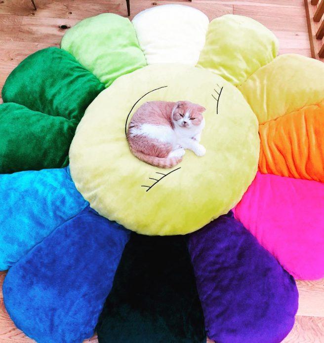 кошка Калиппо