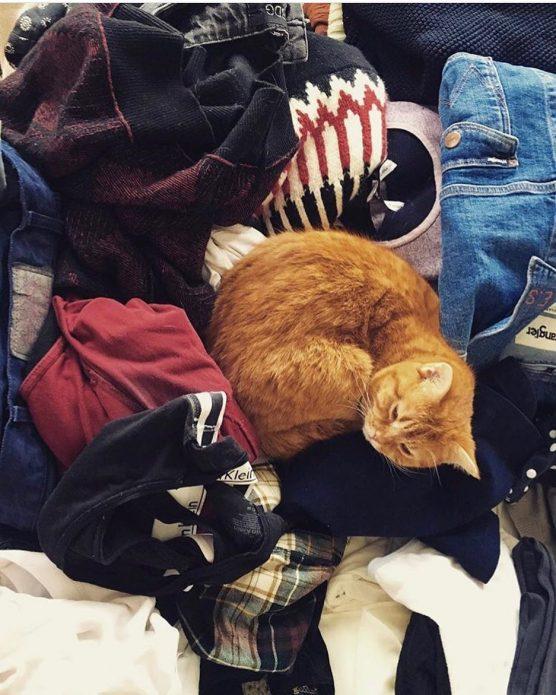 кошка Дорито
