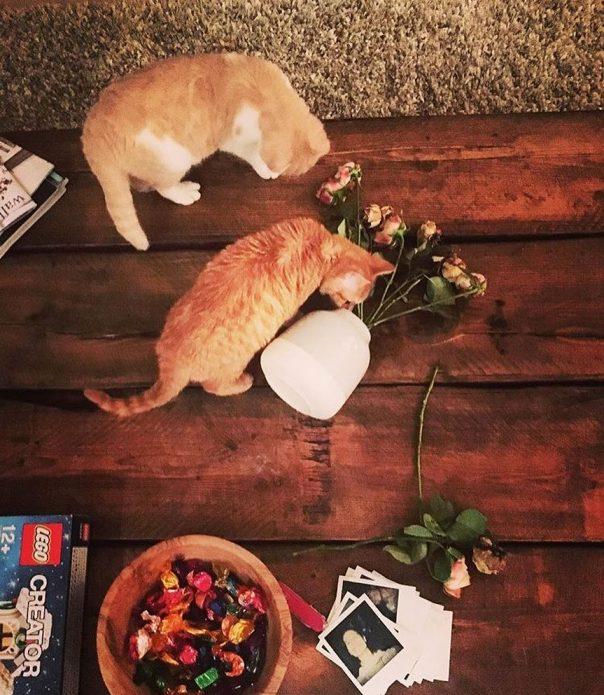 кошки Дорито и Калиппо