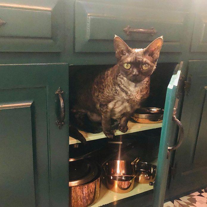 кот Алистер