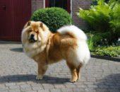 Самая тупая собака в мире