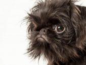 Самые страшные собаки в мире