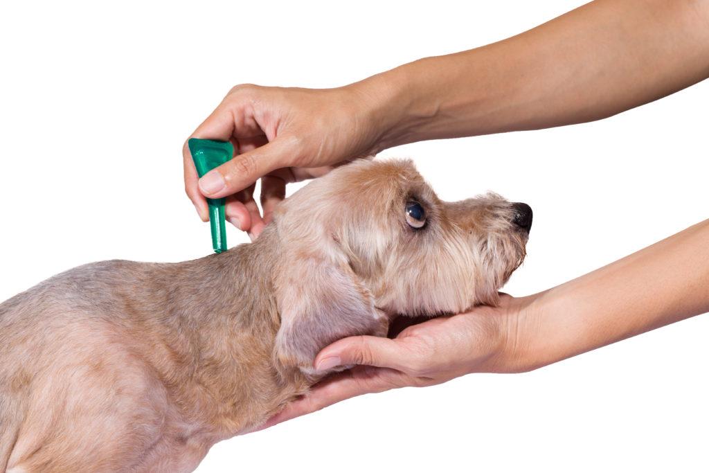 Народные средства от клещей для собак: самые действенные рецепты с пошаговой инструкцией по изготовлению