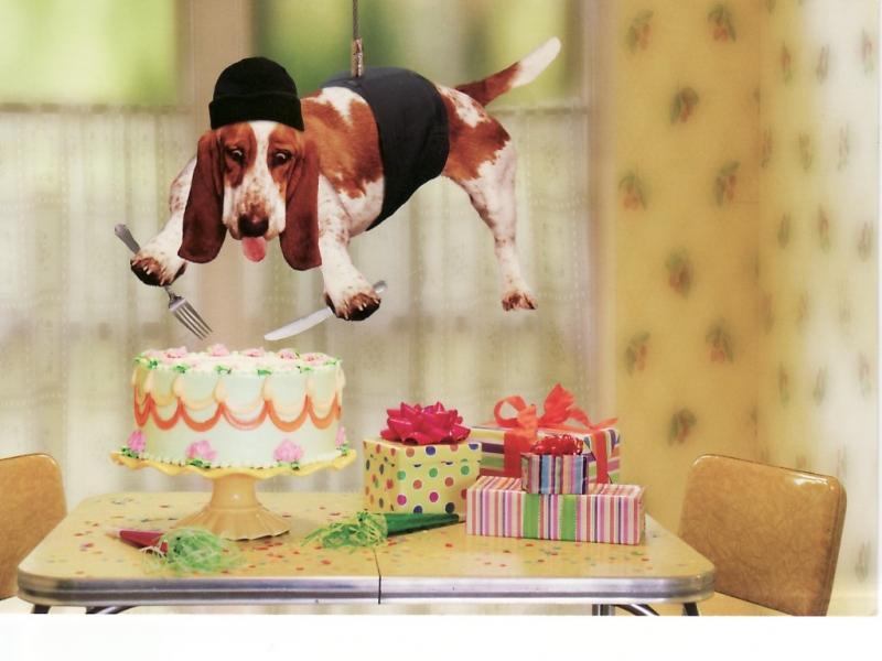 собака ест торт