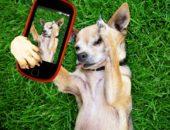 Собака знаменитости