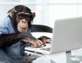 ТОП-10 самых умных животных